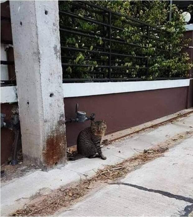 Пропавший домашний кот вернулся кхозяину сдолгами