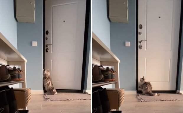 Реакция кошки на уход хозяев из дома растрогала пользователей соцсетей