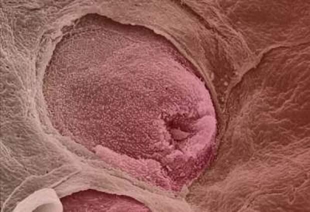 Человек под микроскопом