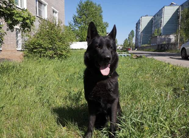Служебная собака помогла найти без вести пропашего ребенка в Братске