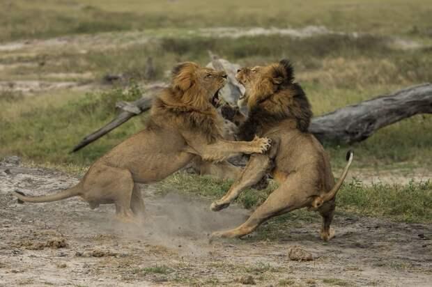 zivotnye za mai 2014 1 ned 4 Лучшие фотографии животных со всего мира за неделю