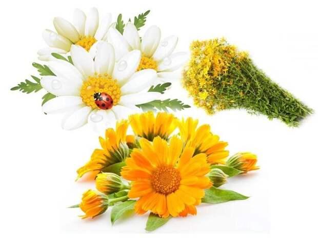 цветы календулы и ромашки