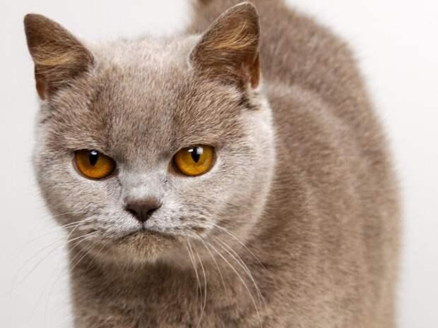 Мой лучший друг, или история об удивительной кошачьей преданности