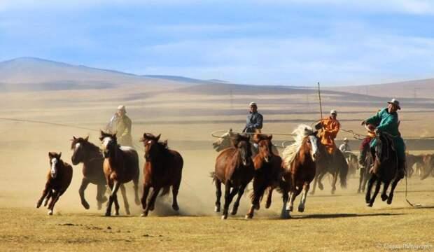 Подборка красивых и познавательных видео посвященных искусству верховой езды монгол.