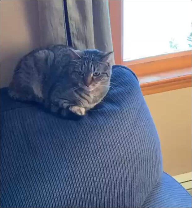Коты ненавидят этот трюк