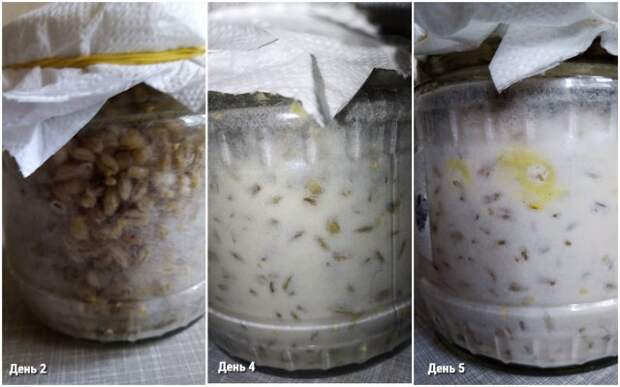 Выращивание триходермы дома