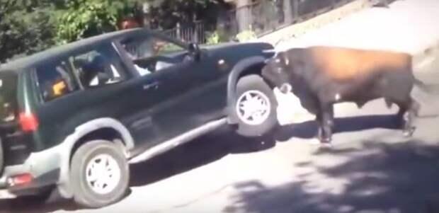 Этого быка не взять за рога: яростное животное против вседорожника Nissan