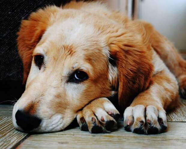 Если собака съела яд на улице - что делать