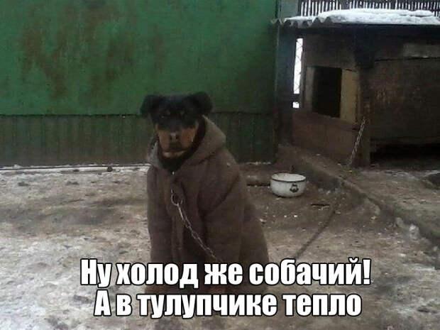 1454514896_kartinki-20