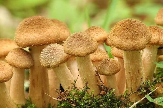 Как растут грибы? Потрясающе!