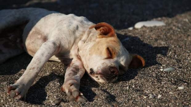 Бродячая собака покусала двухлетнего ребёнка на берегу озера в Ленобласти