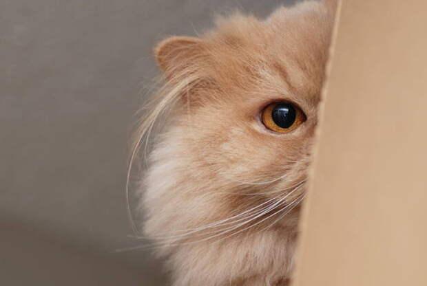 Кошки любят воображаемые коробки