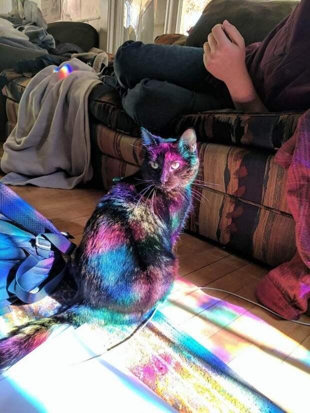 Котик нашел свое волшебное пятно солнечного света животные, котики, лучи, погреться, солнечные ванны, солнце, температура, тепло