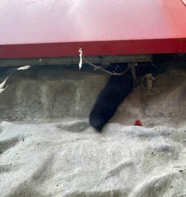 Кошку на Дубнинской спасли из плена рекламной вывески