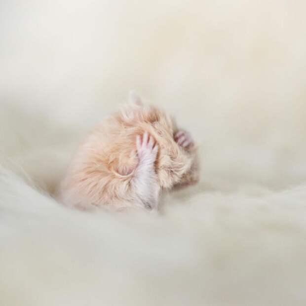 cute-hamsters-52__880