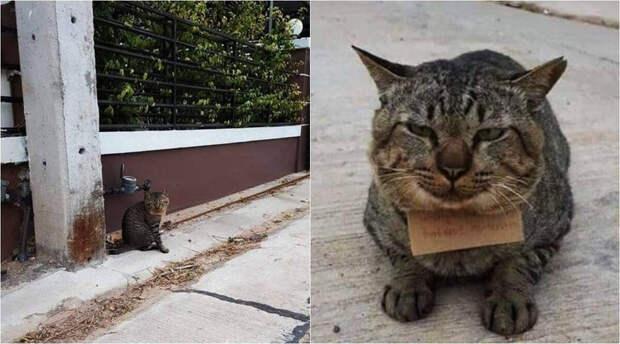 Кот пропадал три дня и вернулся домой с долгами: за что пришлось расплачиваться его хозяину