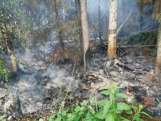 Подземный пожар на торфянике в Удмуртии произошёл из-за удара молнии