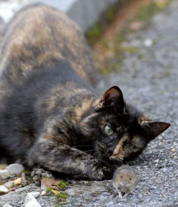 Удивительные фото кошки и мышки с непредсказуемым концом игры животных, кот, мышка