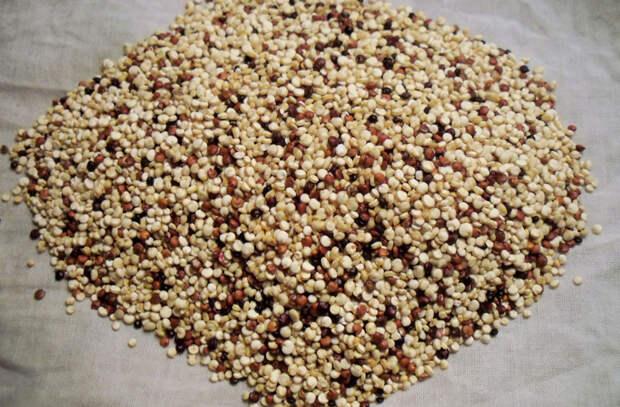 6 зерновых круп, незаслуженно забытых в прошлом