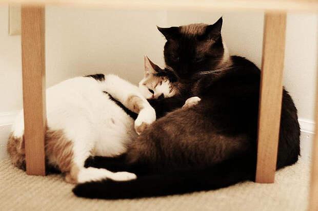 Кошачья любовь. Фото