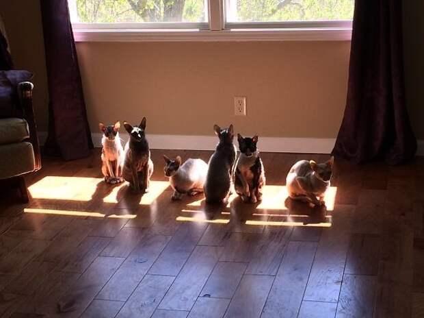 Мои солнцепоклонники животные, котики, лучи, погреться, солнечные ванны, солнце, температура, тепло