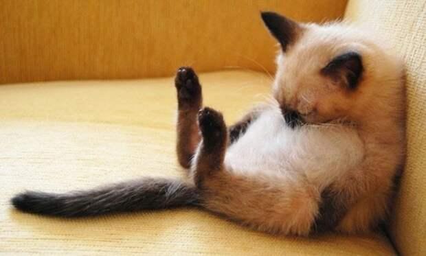 10 доказательств, что лучший способ провести понедельник — выспаться!