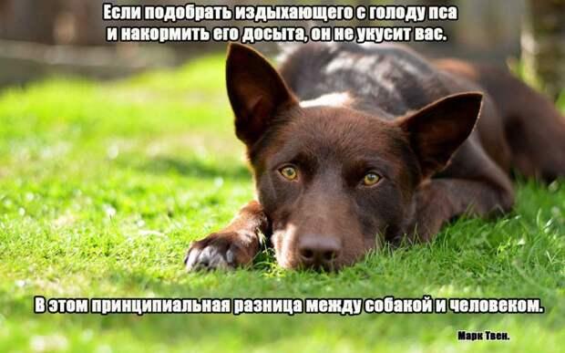 6.  афоризмы, животные, собаки