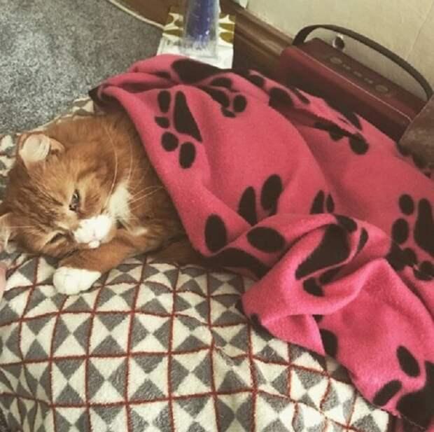 Рыжий кот стал ходить в гости к молодому человеку, а однажды парень открыл дверь и увидел его с раной на лапе