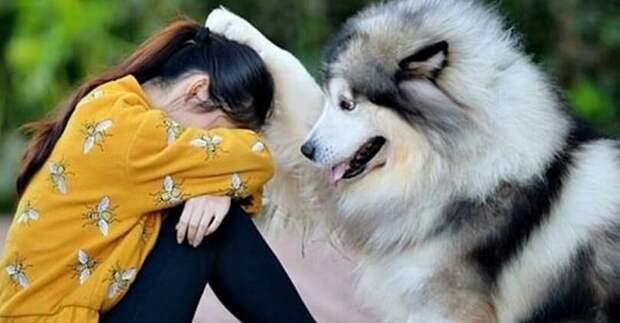 Трогательные кадры большой любви собак к хозяевам