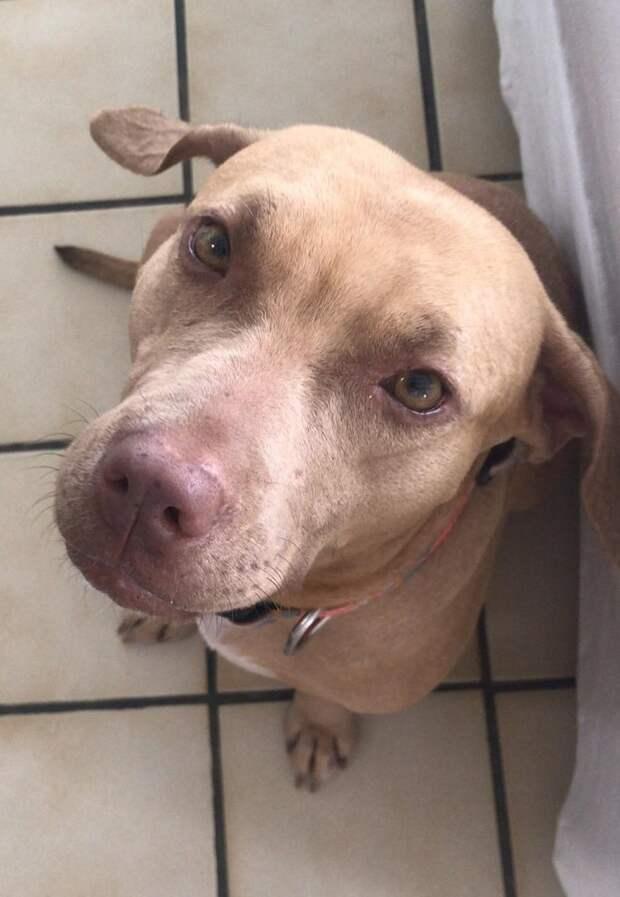 Парень украл собаку, чтобы спасти ей жизнь