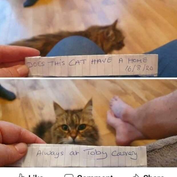 Работники кафе часто подкармливали несчастную кошку, пока кто-то не повесил записку на ошейник