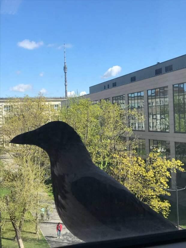 Фото дня: бизнес-ворона из Марьиной рощи