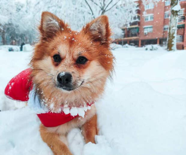 В сквере на Ленской установят специальные таблички для выгула собак