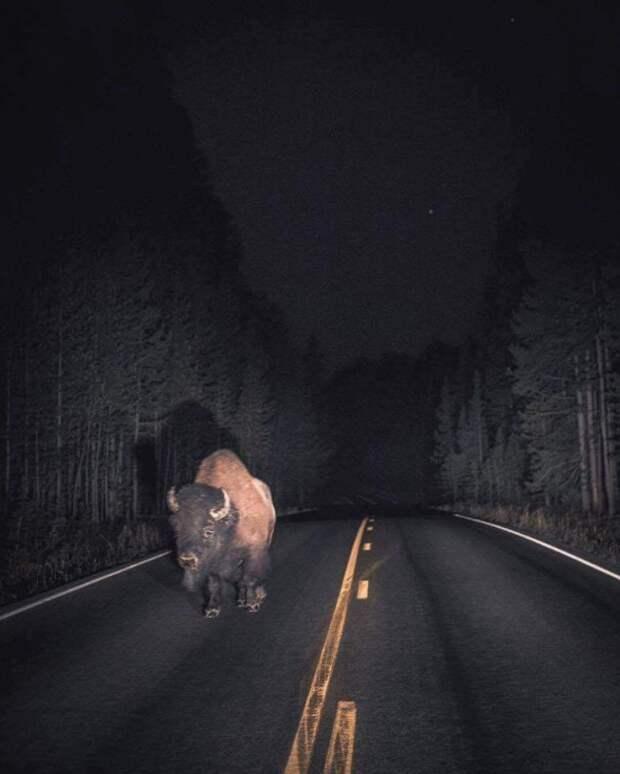 25 доказательств того, что в дороге можно всякого насмотреться
