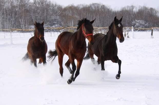 Три лошадиных головы: в Ижевске появится новый памятник