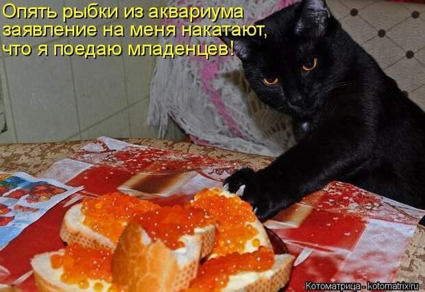 1474017297_kotomatricy-12