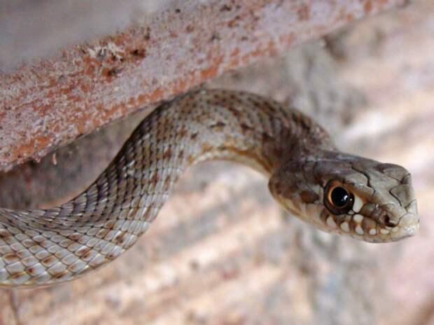 В Петербурге появились первые жертвы ядовитых змей