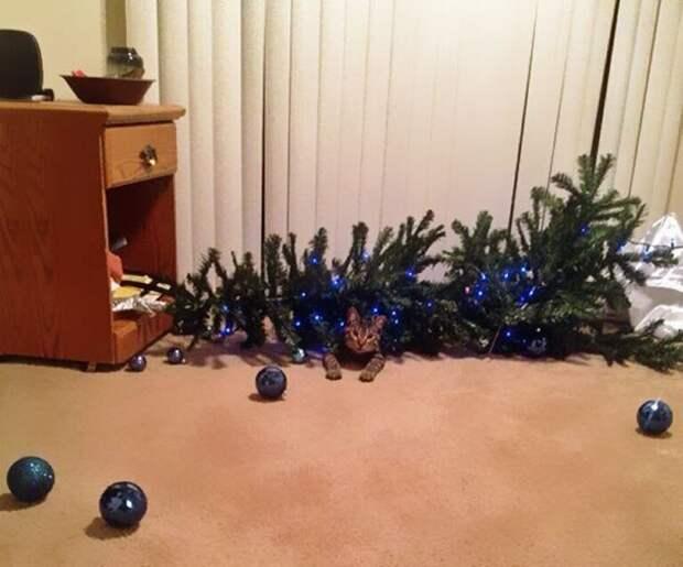 А вот так она лучше смотрится животные, не любят, новый год, планы, смешные, фото
