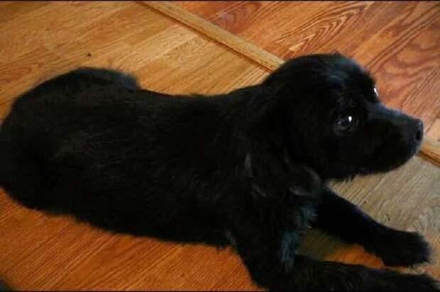 Собака отчаянно пыталась открыть коробку, ведь ее 4 крошки были обречены на гибель!