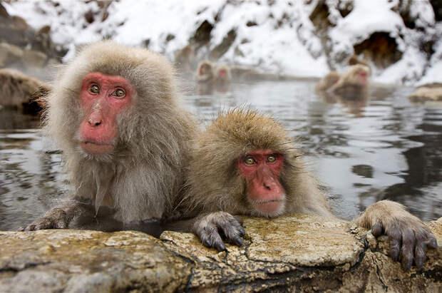 Парк обезьян в «Адской долине»