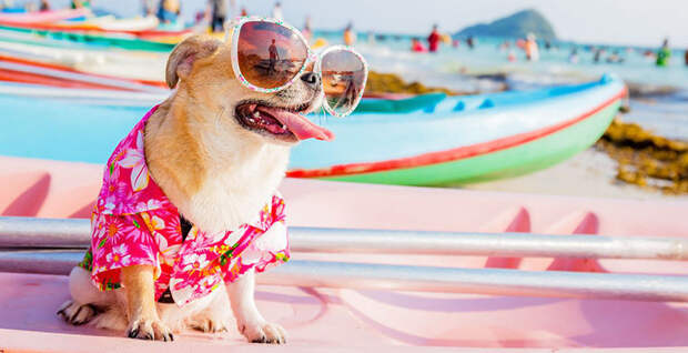 Страдают ли животные от солнечных ожогов?