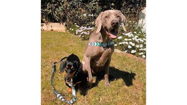 Пес помог собаке справиться с тревожностью и стал ее лучшим другом