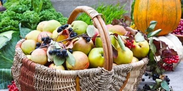 Где осенью найти необходимые витамины: 12 вкусных и полезных продуктов