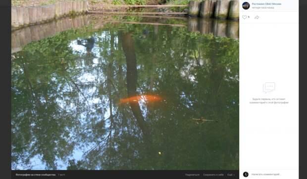 Фото дня: в пруду у Леоновского храма водится «золотая рыбка»
