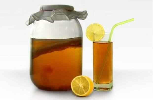 Чайный гриб - польза и вред