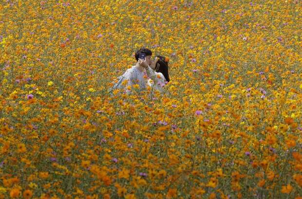 Цветочное поле