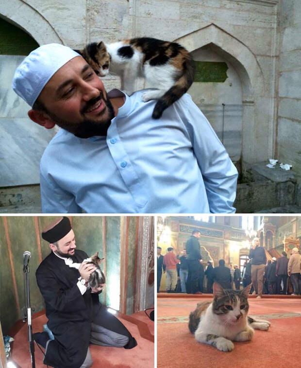 Имам открыл двери мечети для бездомных кошек, чтобы те не мерзли Счастливый конец, животные, спасение