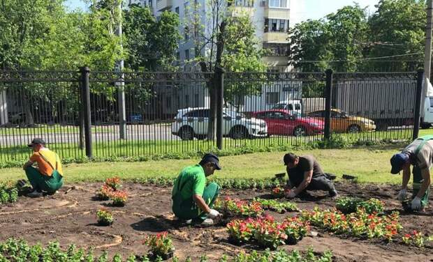 При выборе растений учитываются условия окружающей среды/ГПБУ «Мосприрода»