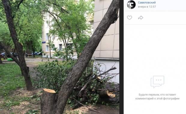 До 30 мая на 1-ой Хуторской проведут санитарную обрезку деревьев