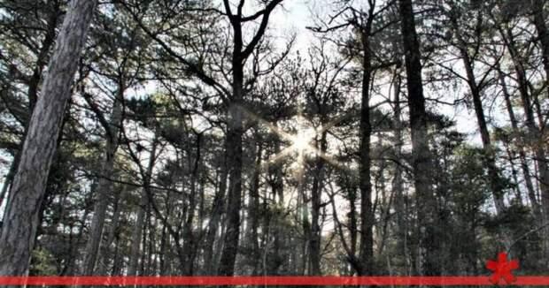 В Севастополе обнаружили неучтенный лес